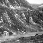 Aulus vers 1900 – Pastoralisme